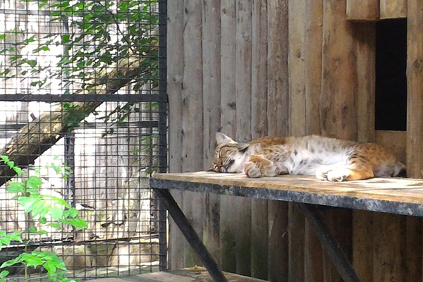 Ce mai este nou sub cerul de vara la Zoo Baneasa