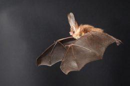 Liliecii si importanta lor in ecosistem