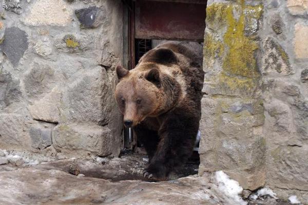 Ingrijitori raniti de o ursoaica la Zoo Brasov